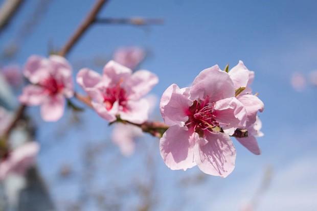 spring_FB